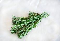 在白色背景的罗斯玛丽枝杈 使用作为烹调草本和为医疗目的 免版税库存图片