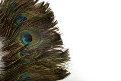 在白色背景的美丽的孔雀羽毛 免版税库存照片