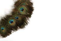 在白色背景的美丽的孔雀羽毛 库存照片