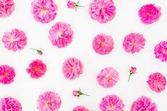 在白色背景的美丽的桃红色玫瑰 平的位置,顶视图 花卉生活方式构成或样式 免版税库存图片