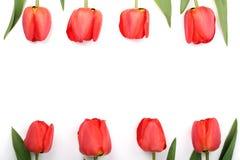 在白色背景的美丽的红色郁金香与文本的拷贝空间 顶视图,平的位置 免版税图库摄影
