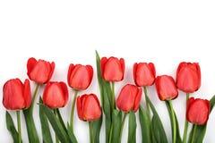 在白色背景的美丽的红色郁金香与文本的拷贝空间 顶视图,平的位置 库存图片
