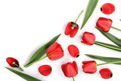 在白色背景的美丽的红色郁金香与文本的拷贝空间 顶视图,平的位置 免版税库存图片
