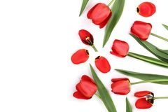 在白色背景的美丽的红色郁金香与文本的拷贝空间 顶视图,平的位置 免版税库存照片