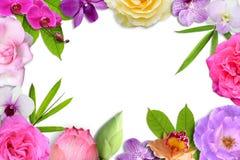 在白色背景的美丽的花开花和叶子框架孤立 免版税图库摄影