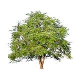 在白色背景的美丽的绿色树在高定义 库存图片