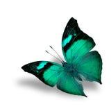 在白色背景的美好的飞行淡绿色的蝴蝶 图库摄影