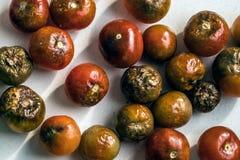 在白色背景的老腐烂的西红柿从上面 免版税库存照片