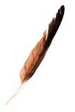 在白色背景的老鹰羽毛 图库摄影