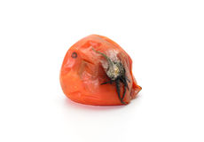 在白色背景的腐烂的蕃茄 免版税图库摄影