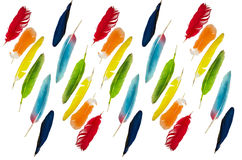 在白色背景的色的羽毛 库存图片