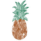 在白色背景的艺术性的菠萝 库存图片