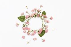 在白色背景的花卉圆的框架 平的位置,顶视图 免版税库存照片