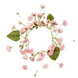 在白色背景的花卉圆的框架 平的位置,顶视图 库存照片