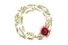 在白色背景的花卉圆的框架 平的位置,顶视图 图库摄影