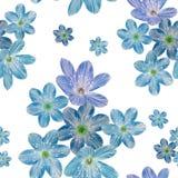 在白色背景的花卉无缝的样式 向量例证