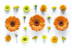 在白色背景的花卉Arrngement 免版税图库摄影