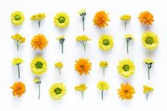 在白色背景的花卉Arrngement 免版税库存图片