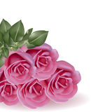 在白色背景的花束桃红色玫瑰 免版税库存照片