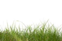 在白色背景的草树 库存照片