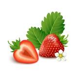 在白色背景的草莓 库存照片