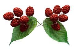 在白色背景的莓例证 免版税库存照片