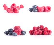 在白色背景的莓果 库存照片
