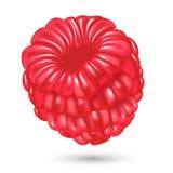 在白色背景的莓 也corel凹道例证向量 向量例证