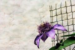 在白色背景的蓝色花与一个绿色格栅 免版税库存照片