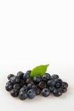 在白色背景的蓝莓 库存照片
