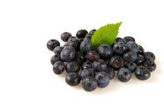 在白色背景的蓝莓 图库摄影