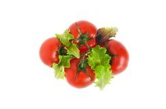 蕃茄和莴苣叶子 免版税库存照片