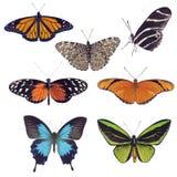 在白色背景的蝴蝶汇集 免版税库存图片
