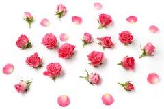 在白色背景的被分类的玫瑰头 顶上的视图 平的位置 免版税库存照片