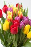 在白色背景的被分类的郁金香花束 库存照片