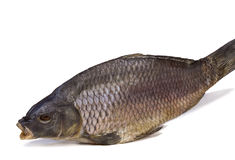 在白色背景的被盐溶的和干河鱼。 库存图片