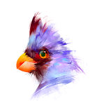 在白色背景的被绘的明亮的鸟 向量例证