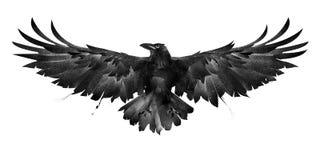 在白色背景的被绘的鸟乌鸦前面 库存图片