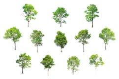 在白色背景的被隔绝的树 免版税库存照片