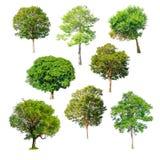 在白色背景的被隔绝的树 库存图片