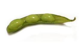 在白色背景的被隔绝的健康新鲜的绿色大豆 库存图片