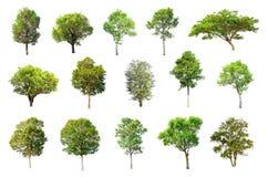 在白色背景的被隔绝的树,树的汇集 库存图片