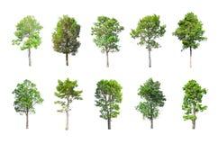 在白色背景的被隔绝的树,树的汇集 库存照片