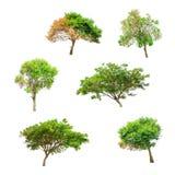 在白色背景的被隔绝的树,树的汇集 免版税库存图片