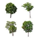 在白色背景的被隔绝的树,树的汇集 免版税图库摄影