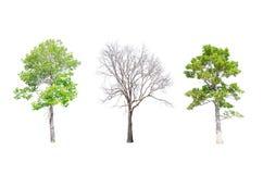 在白色背景的被隔绝的树 图库摄影