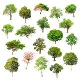 在白色背景的被隔绝的树 免版税库存图片