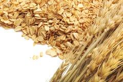在白色背景的谷粒整个燕麦片 免版税库存图片