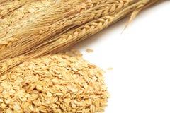 在白色背景的谷粒整个燕麦片 图库摄影
