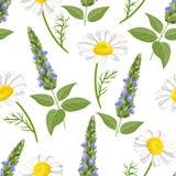在白色背景的贤哲和春黄菊无缝的样式 库存例证